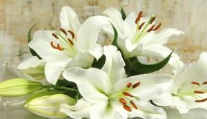 Easter Flower the Lily - Ostern blühen die Lilien