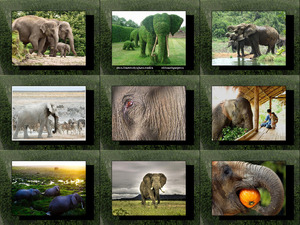 Elefantes - Elefanten