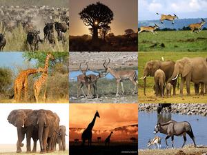 Afrika Sunrise- Jantjebeton
