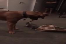 Hund bespaßt Kätzchen