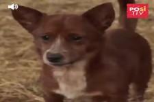 Hund ist traurig