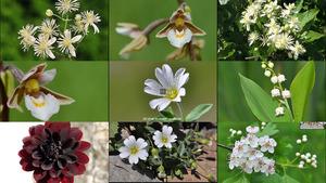 Des Fleurs Noires et Verts 4 - Schwarze und grüne Blumen 4