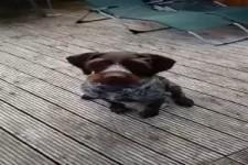 Folgsamer Hund