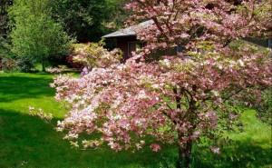 Miracle of Spring - Wunder des Frühlings