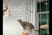 Katzen bei der Nahrungssuche