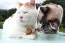 Katze mit Schnecke