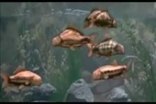 Lustiges Aquarium