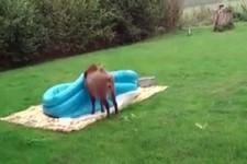 Das Schwein hat Spaß