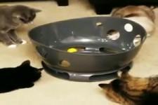 Katzen-Beschäftigung