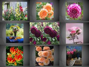 Beautyful Blumen