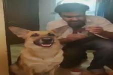 Hund als Dieb präparieren