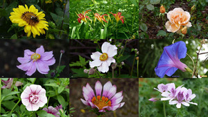 Pispotje & Co - Blumen