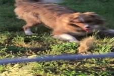 Mutiges Streifenhörnchen
