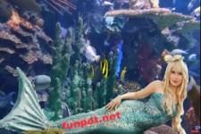Entspannendes Aquarium