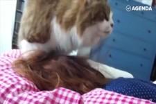 Katzen wecken dich auf