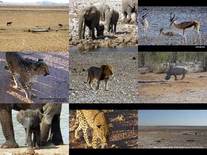 Namibias Tierwelt