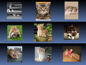 Katzenfreunde