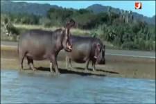 Lustige, besoffene Welt der Tiere