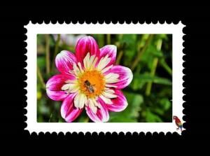 Dahlien Briefmarken