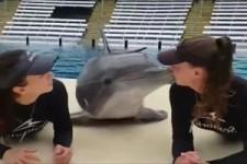 Lustiger Delfin