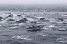 So viele Delfine
