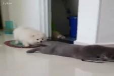 Hunde und Katzen