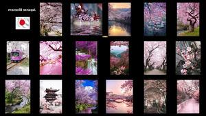 Japanse Bloesem - Japanische Blüte