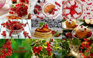 Red Currants - Rote Johannisbeeren