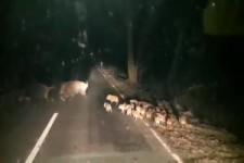 Wer geht nachts in Meeuwen die Straße entlang?