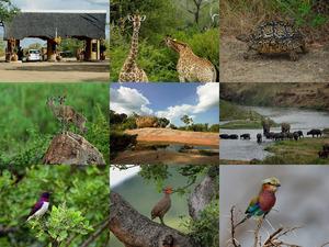 Afrika - Krugerpark