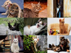 Must Love Cats 1 - Diese Katzen muss man lieben 1