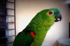 Musikalischer Vogel