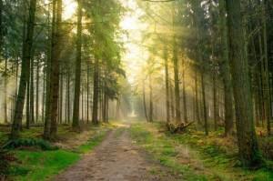 Faszination Wald 1