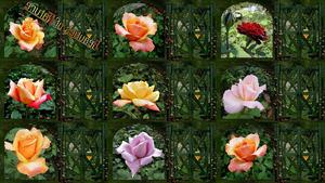 Beauties of Nature - Schönheiten der Natur