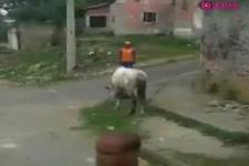 Ärgere nicht das Pferd