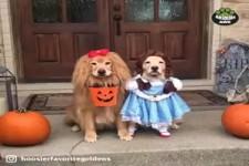 Tiere an Halloween