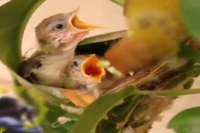 Ein kleines Nest