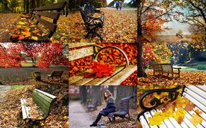 Autumn Benches - Herbstbänke