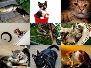 Must Love Cats 3 - Muss Katzen lieben 3
