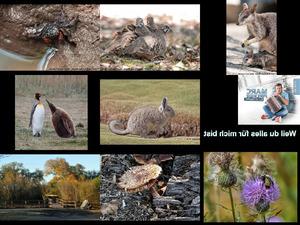 Bilder-Galerie vom 20012019 6 Naturbilder