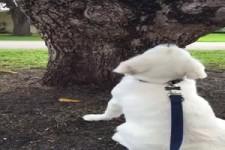 Wo ist nur das Eichhörnchen