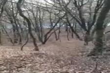 Ddirtbike im Wald einparken