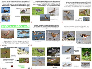 ungewöhnliche Tiere - Schnepfenvögel