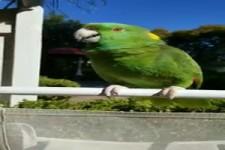 Faszinierender Papagei