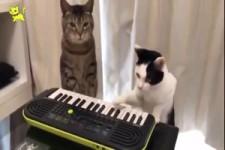 Spaßige Katzen