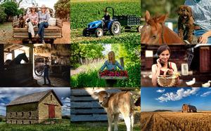 Farm 2 - Bauernhof 2