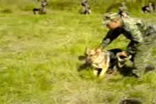 Russische-Hundekampfstaffel