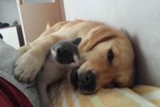 Ein tierisches Paar