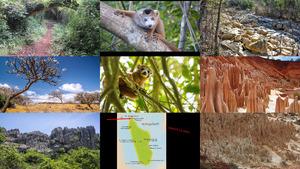 Ankarana Madagaskar