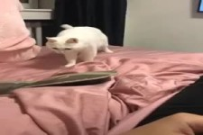 Katzen-Equalizer